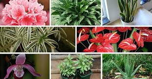 10 indoor plants that you can grow in