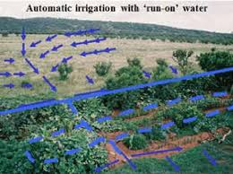 homestead rainwater harvesting matshepo