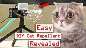 how you can make a cat repellent for