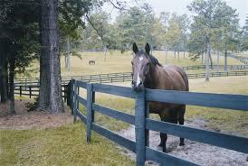 North Carolina Wood Corral Horse Fencing General Timber