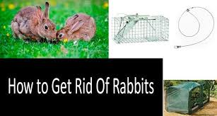 How To Get Rid Of Rabbits Both In Winter And In Summer 7 Best Methods And Tips