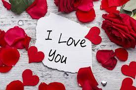 hd wallpaper red roses love petals