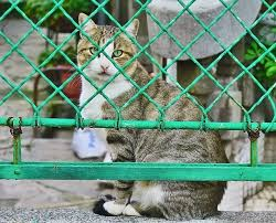 Cat Fence Affordable Containment Options Including Rollers And Wireless