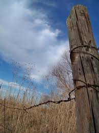 Pin On Boots Birds Fence Posts