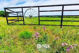 A Fence With Wagon Wheel And Beautiful Field Full Of Bright Orange Indian Paintbrush Stock Photo Picture And Low Budget Royalty Free Image Pic Esy 037486161 Agefotostock