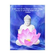 zen words of wisdom gifts on zazzle au