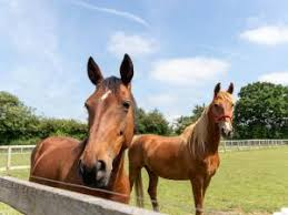 Group Visits at Redwings Ada Cole Visitor Centre | Animals & Wildlife |  Waltham Abbey|Essex