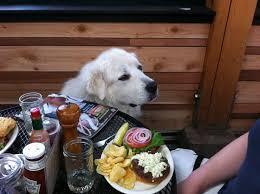 top dog pet friendly pub restaurant