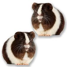 2 X 20cm 200mm Guinea Pig Vinyl Self Adhesive Sticker Decal Laptop Travel Luggage Car Ipad Sign Fun 6617 On Galleon Philippines