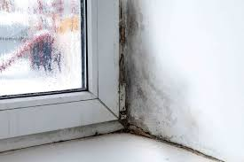 how to prevent mold 9 tips