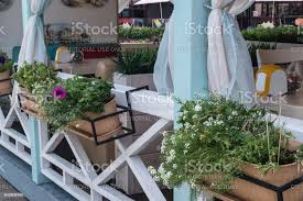 Balcony Flowerpot With Flowers On The White Wooden Fence In The Cafe Stock Photo Download Image Now Istock