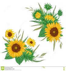 Girasoles Fijados Elementos Decorativos Del Diseno Floral De La
