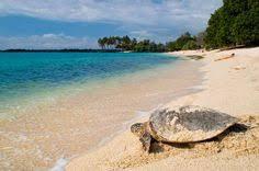 11 tendencias de tortugas marinas para explorar | Tortugas marinas ...
