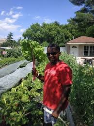 urban gardening in toronto will grow