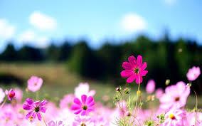 flower desktop wallpapers top free