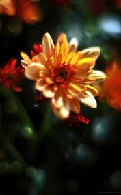 1600x2560 الزهور خلفية Phablet صور لسطح 7287007