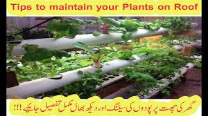 vegetable garden layout ideas bloom