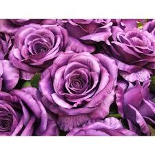 vinyl purple rose wallpaper rs 130