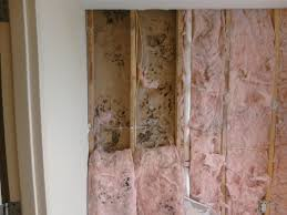 remove mold from drywall in orange