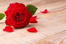 اجمل ورود الحب صور ورد رومانسية مجلة البرونزية
