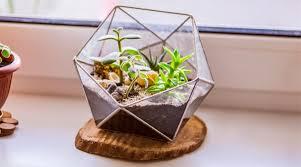66 small terrarium ideas
