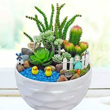 indoor plants and baskets for the home