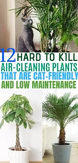 12 indoor plants that clean the air and