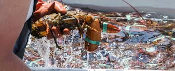 Lobster Fishing in Maine ...