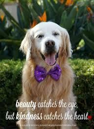 This Moment} See Beautiful: Beauty and Kindness | Golden retriever, Golden  retriever mix puppies, Retriever