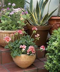 16 container gardening ideas potted