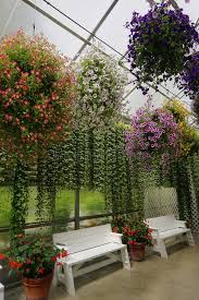 172 Fence Hanging Plants Wooden Photos Free Royalty Free Stock Photos From Dreamstime