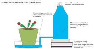 Vacaciones: Consejos para dejar plantas solas en verano | Página 3