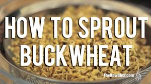 sprouted buckwheat how to sprout