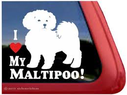 I Love My Maltipoo Dc212hea High Quality Adhesive Etsy