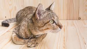 best cat food for kidney disease top
