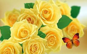 yellow rose background hd 960x594