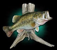 largemouth bass mounts by marine