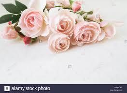 Rosas Rosas Aislado Sobre Fondo Blanco Perfecto Para Invitaciones