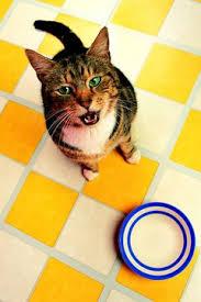 making hypoallergenic cat food pets