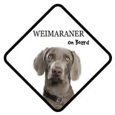 Weimaraner Dog On Board Car Sign With Sucker Sticker Decal Ebay