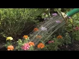 water saving tips for the garden