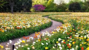 flowers garden road colors wallpaper