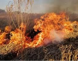 Засуджено місцевого жителя Марківщини, який здійснив підпал трави