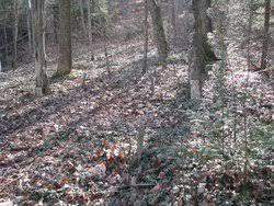 Priscilla Turner Cemetery in Nora, Virginia - Find A Grave Cemetery