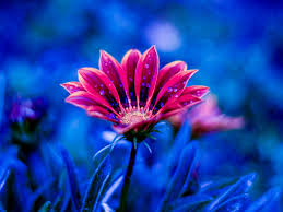 beautiful flower images for desktop لم
