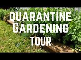 quarantine gardening tour in texas in