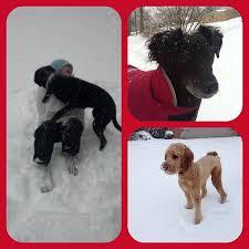 snow day pics in northwest arkansas