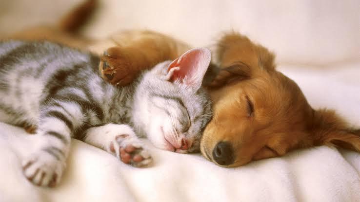 7 Hal Yang Harus Kamu Siapkan Sebelum Mengadopsi Kucing Liar