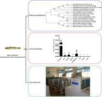 Molecular cloning, tissue expression, and transcriptional regulation of  fabp1 and fabp2 in javelin goby (Synechogobius hasta) in response to  starvation stress. - Comp. Biochem. Physiol. B Biochem. Mol. Biol. - X-MOL