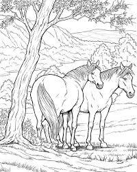 Paarden Kleurplaat In 2020 Kleurplaten Adult Coloring Pages